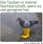 Tauben-bei-Regen.jpg auf www.funpot.net