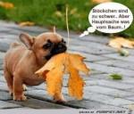 Stöckchen-sind-zu-schwer.......jpg auf www.funpot.net