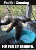 Katze-chillt-am-Sonntag.jpg auf www.funpot.net