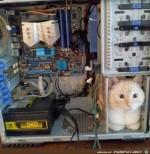 Warmes-Plätzchen-für-die-Katze.jpg auf www.funpot.net