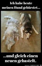 Hund-gebuerstet.jpg auf www.funpot.net
