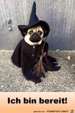 Halloween-bin-bereit.jpg auf www.funpot.net