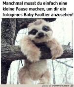 Niedliches-Baby-Faultier.jpg auf www.funpot.net