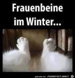 im-Winter.jpg auf www.funpot.net