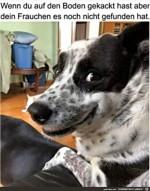 Hund-wartet.jpg auf www.funpot.net
