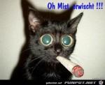 Mist---erwischt!.jpg auf www.funpot.net