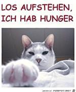 Steh-auf---die-Katze-hat-Hunger.jpg auf www.funpot.net