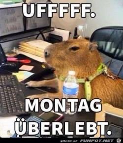 Montag-geschafft.jpg auf www.funpot.net