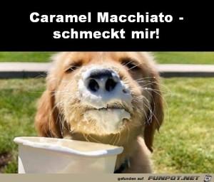 Hund-liebt-Caramel-Macchiato.jpg auf www.funpot.net