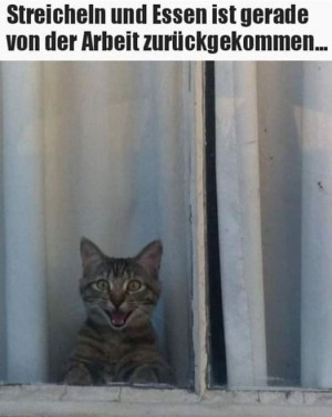 Katze-freut-sich.jpg auf www.funpot.net