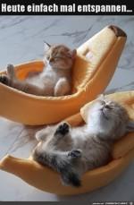 so-sieht-Entspannung-aus.jpg auf www.funpot.net