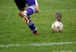 Fussball--Katze.jpg auf www.funpot.net