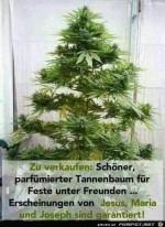 Parfümierter-Tannenbaum.jpg auf www.funpot.net