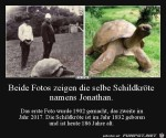 Schildkröte.jpg auf www.funpot.net