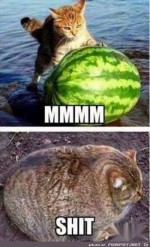 Melone.jpg auf www.funpot.net