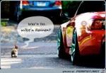 Willst-du-ein-Rennen?.jpg auf www.funpot.net
