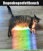 Katze-mit-buntem-Fettbauch.jpg auf www.funpot.net