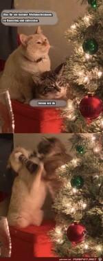 Katzengespräch-über-den-Weihnachtsbaum.jpg auf www.funpot.net
