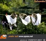 Niedliche-Wäsche.jpg auf www.funpot.net