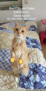 Katze-freut-sich-auf-Paket.jpg auf www.funpot.net