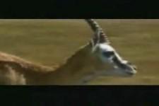 The Antelope Movie