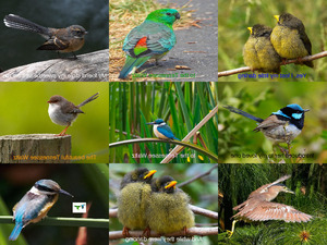 Tennessee Waltz mit Vogelbildern