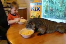 kid eats breakfast with pet iguana