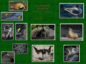 Galapagos Islands - Fauna and Flora