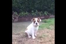 Erster Regen für diese Bulldogge