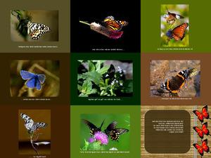 Achtet auf die Schmetterlinge