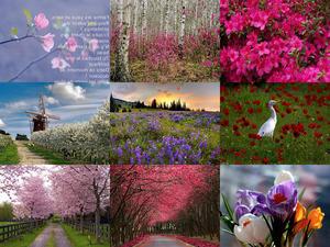 Schöne Natur - Frühlings-Zeit
