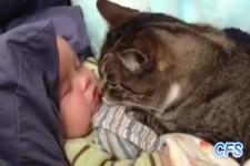 Katzen-Nanny