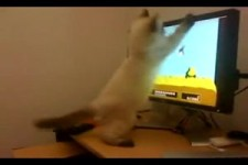 Cat Furiously Plays Duck Hunt