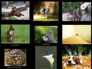 SUGAR - witzige Bilder mit Tieren