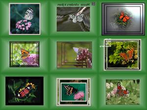 Mooie vlinders kijken