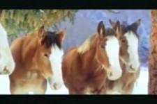 pferde-schneeballschlacht