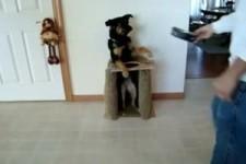 viele Grüsse von einem wohlerzogenen Hund