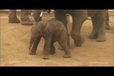 Elefanten im Zoo von San Diego