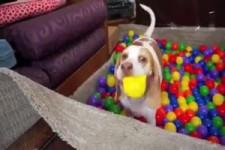 Baelle-Bad fuer den Hund