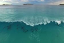 Delfine wellenreiten
