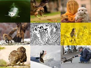 Excellent animal shots
