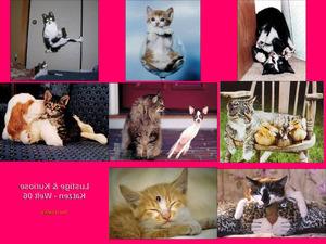 Lustige Katzen-Bilder