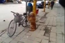 dieser Hund fährt gerne Fahrrad
