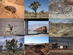 Super Eindrücke von der Mojave-Wüste 1