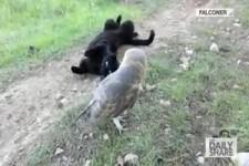 Katze und Eule - beste Freunde