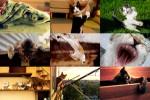 Cats-action-1---Katzen-in-Aktion.ppsx auf www.funpot.net