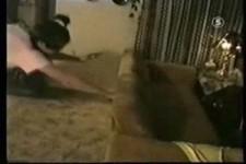 Hoppalas mit Hunden