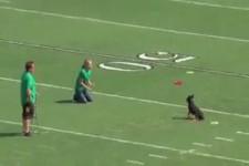 Hunde am Fussballplatz