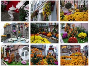 Chrysanthemum Festival Lahr
