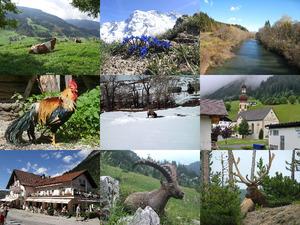 Hoch in den Alpen